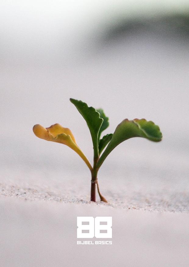 Veertigdagentijd I: Zaaien en groeien